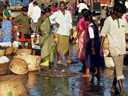 Čerstvě ulovený rejnok na rybářském trhu na pláži u vesnice Harnai, Maharáštra