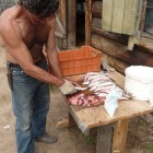 Sedmdesátiletý (!) rybář Genadij, jež v mládí pracoval na stavbě Bajkalsko-Amurské magistrály. Dnes se živí rybařením. Jeho kuchání ryb bylo uchvacující - celé 4 tahy: rozříznout, vyškrábnout vnitřnosti, rozevřít a naříznout podél páteře. Hotovo! No a samozřejmě, není nad čerstvě nalovenou rybu... (Burjatsko, pol. Svatý Nos, Čivyrkujský záliv, Katuň)