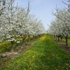 Slavnosti květů 2016 – sobota 30. dubna 9.30